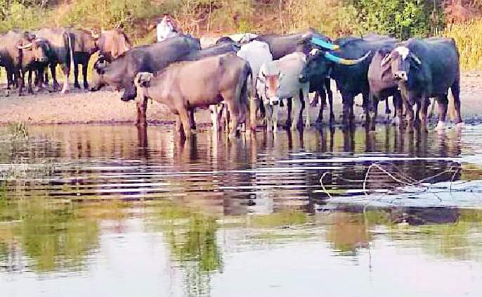 Water of Upper Wardha dam in Tivasa taluka | तिवसा तालुक्यात अप्पर वर्धा धरणाचे पाणी दाखल