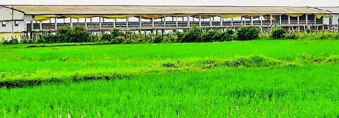 Eventually the poultry plant in the Kambalpetha will be removed | अखेर कंबलपेठातील कुक्कुटपालन केंद्र हटणार