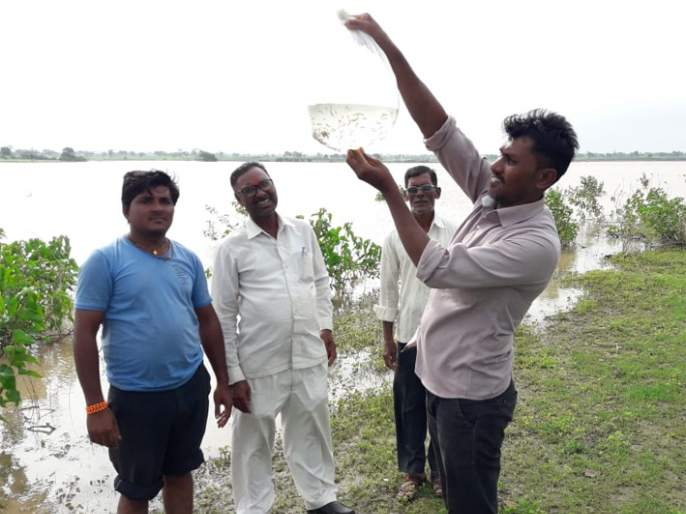 Five lakh fish seeds left in 'Jui' | 'जुई'त सोडले पाच लाख मत्स्यबीज