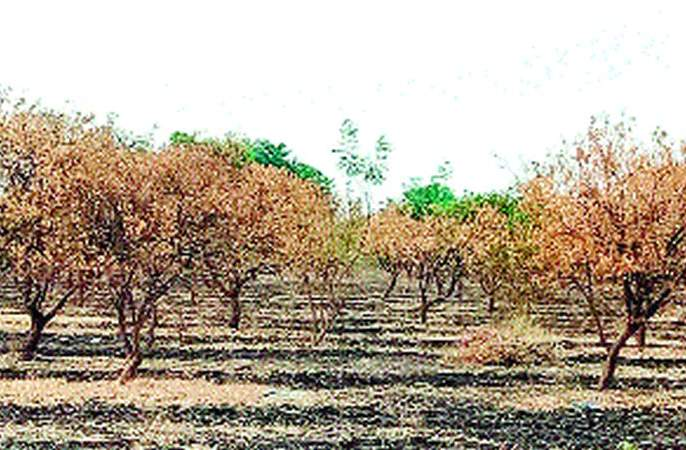 The water is not given to the coconut | मोसंबीला पाणी न देता दिले गावाला