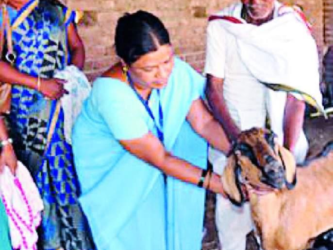 Goats for ATMs for Dahely villagers | दहेली गावकऱ्यांसाठी शेळ्या बनल्या एटीएम