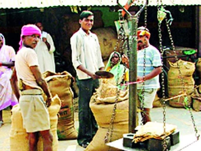 The cultivation of sugarcane is recorded on Satbara is Paddy   लागवड उसाची सातबारावर नोंद धानाची