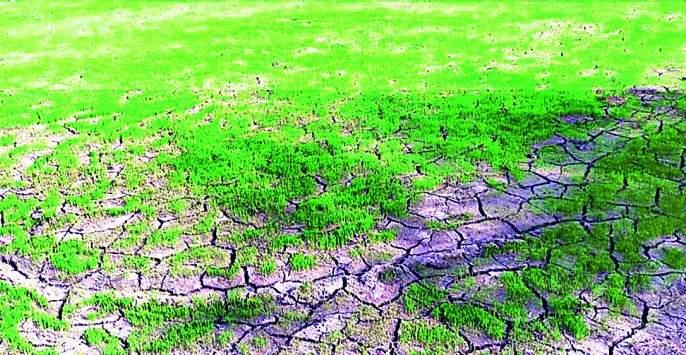 Due to the sowing crisis of farmers | शेतकऱ्यांवर दुबार पेरणीचे संकट