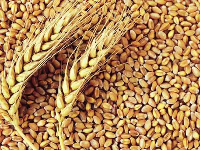 Rotten wheat in Kolhapur for ration | रेशनसाठी कोल्हापुरात निकृष्ट गहू