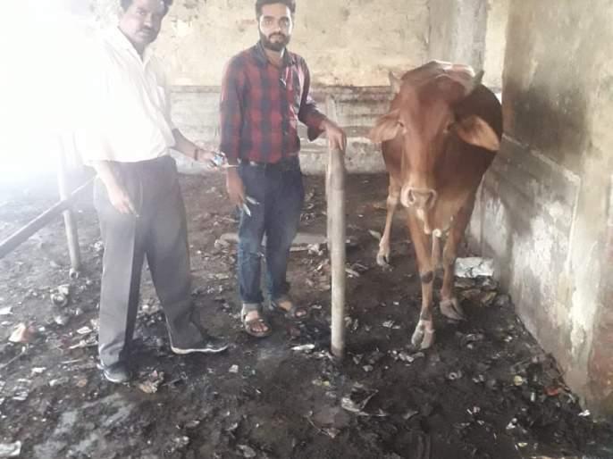 Livestock Guy Due to Newspaper Dealers | वृत्तपत्र विक्रेत्यामुळे गाईला जीवदान