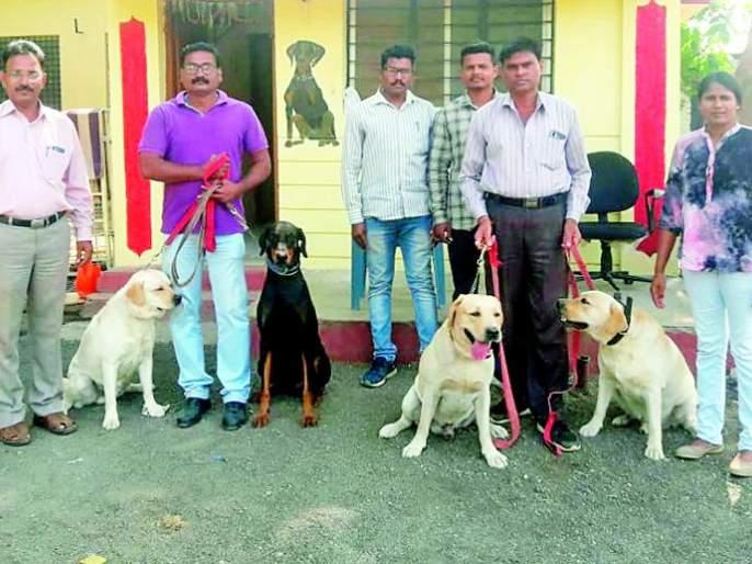 Dogs, five dogs serving in the bomb search squad | श्वान, बॉम्ब शोध पथकात पाच श्वान देताहेत सेवा