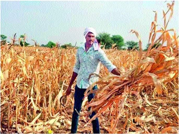 Dattu Bhokanal's relationship with black soil still tight!   दत्तू भोकनळचे आजही काळ्या मातीशी नाते घट्ट !