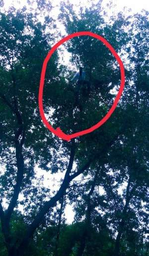 Two teachers climbed a tree in Gondia district | गोंदिया जिल्ह्यात दोन शिक्षकांचे झाडावर चढून आंदोलन