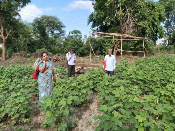 Help to farmer lower than crop loss   नुकसान मोठे; मदत तुटपुंजी!