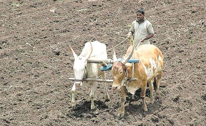 Plantation in the premises of Sinnar Agricultural Produce Market Committee   सिन्नर कृषी उत्पन्न बाजार समितीच्या आवारात वृक्षारोपण