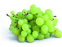 The season of 85 percent of the grapes in the district remains | जिल्ह्यातील ८५ टक्के द्राक्षाचा हंगाम उरकला