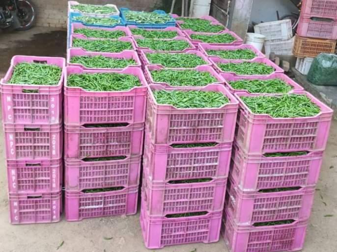 Vegetables in Bhandara district in gulf market | भंडारा जिल्ह्यातल्या भाज्या निघाल्या सातासमुद्रापार
