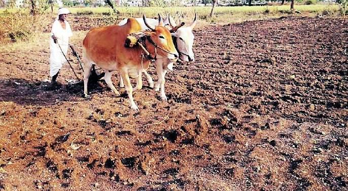 Sowing of 1 lakh 91 thousand hectares avoided   १ लाख ९१ हजार हेक्टरमधील पेरण्या खोळंबल्या