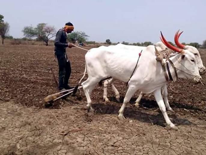 Parbhani: Due to the stress of rain, concerns of farmers increased | परभणी: पावसाने ताण दिल्याने शेतकऱ्यांची चिंता वाढली