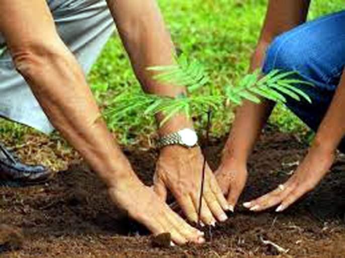 Parbhani: A Fodder for Tree Plantation Campaign Officers | परभणी : वृक्ष लागवड मोहीम अधिकाऱ्यांसाठी ठरली कुरण