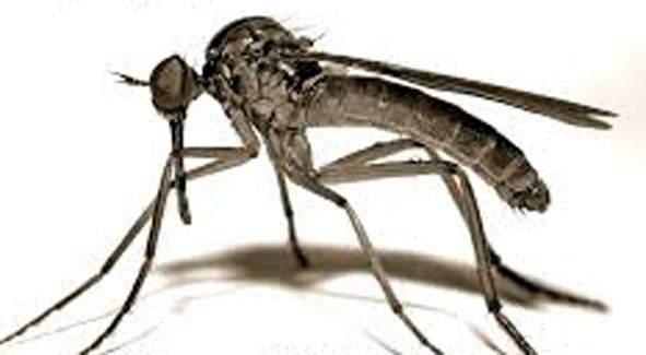 Parbhani: 5 dengue cases in one and a half months | परभणी : दीड महिन्यांत ७० डेंग्यू संश्यित