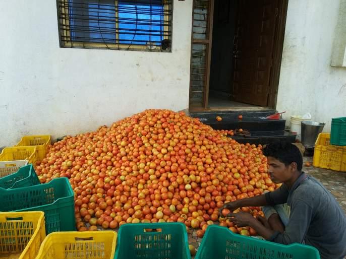 The market is waiting for the tomato crop | बाजारभावाने टमाटे पिकाची लागली वाट