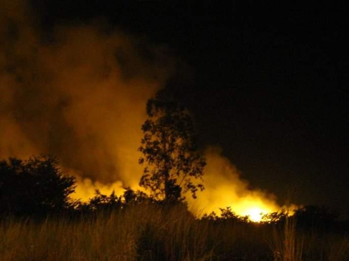 NASA will immediately provide forest fire alerts   'नासा' तात्काळ देणार जंगलातील आगीचा अलर्ट