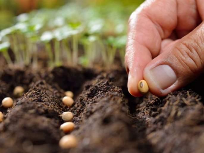 Seed fees, royalties will be discussed   बियाणांची फी, राॅयल्टीबाबत होणार विचारमंथन