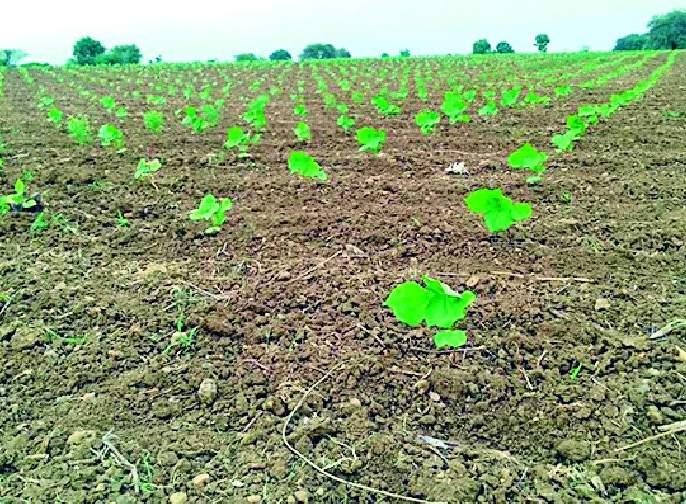 Now the eyes of farmers on 'Pushya' nakshatra   आता 'पुष्य' नक्षत्राकडे शेतकऱ्यांच्या नजरा