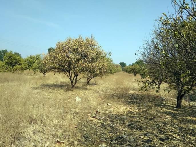 Farmer's big exercise to save orchards | फळबागा वाचवण्यासाठी शेतकऱ्यांची मोठी कसरत