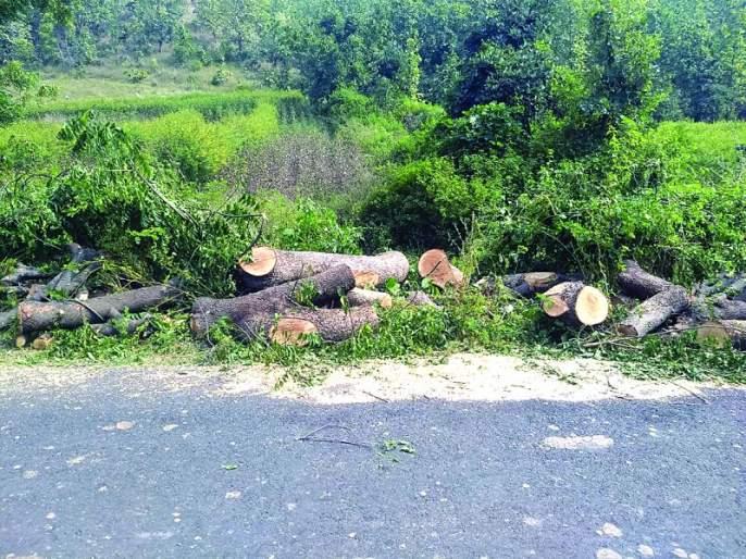Cutting dense trees in highway work! | महामार्गाच्या कामात डेरेदार वृक्ष होताहेत जमीनदोस्त!