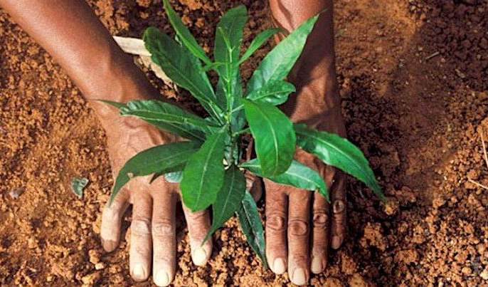 2.40 lakh fruit trees will be planted in Washim district! | वाशिम जिल्ह्यात २.४० लाख फळझाडांची होणार लागवड!