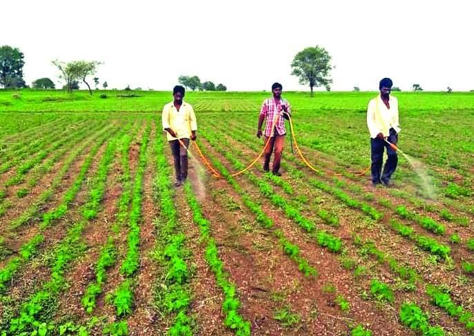 Sprying not iffective on crops due to lack of rain | पावसाअभावी पिकांवरील फवारणी ठरतेय 'फेल'!