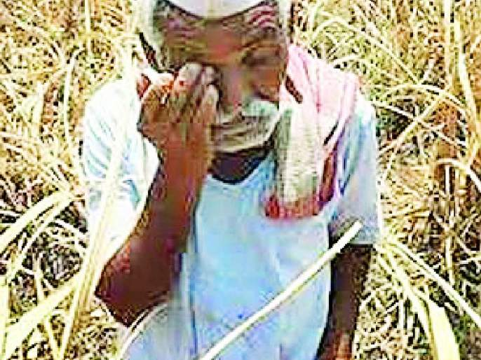 26 thousand farmers are eligible for help | २६ हजार शेतकरी मदतीसाठी पात्र