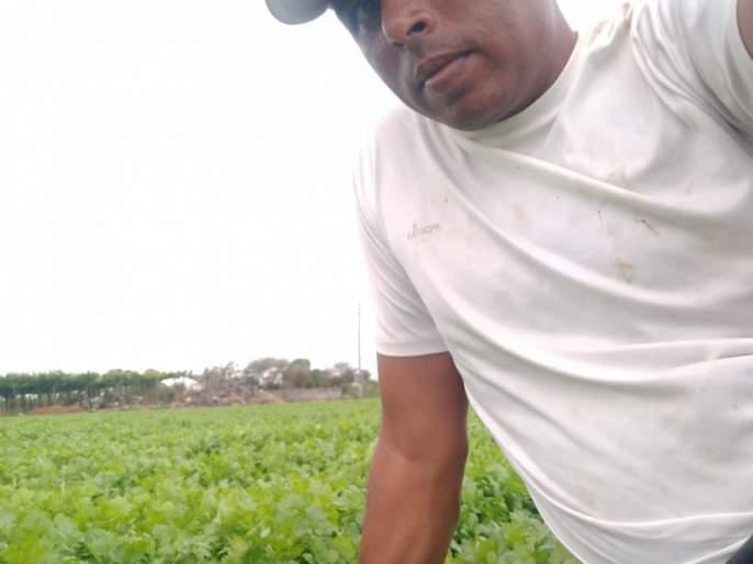 The farmer got three lakhs of acre from Kothimbiri | तीन एकरावरील कोथिंबिरीतून शेतकऱ्याला मिळाले १७ लाख