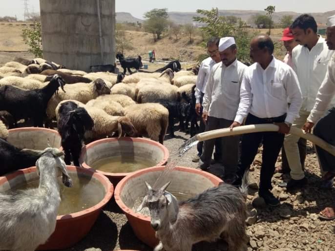 Water supply facility for animals and birds from cement containers | पाटोळ्यात सिमेंटच्या भांड्यातून पशु-पक्षांसाठी पाण्याची सुविधा