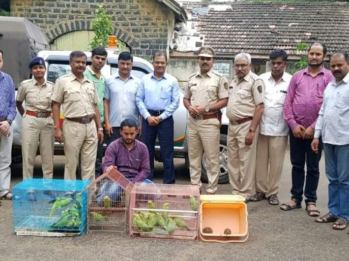 Two star tortoises seized from seller, 1 parrot seized | विक्रेत्याकडील दोन तारा कासव, ४३ पोपट जप्त