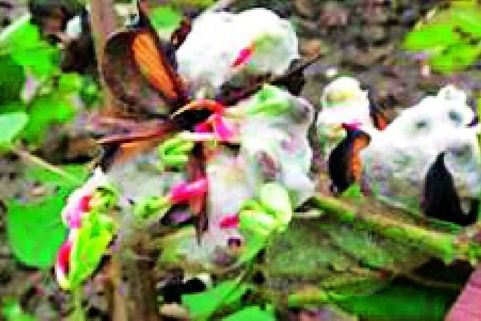 Agricultural economy in the district is disturbed | जिल्ह्यातील कृषी अर्थव्यवस्था खिळखिळी