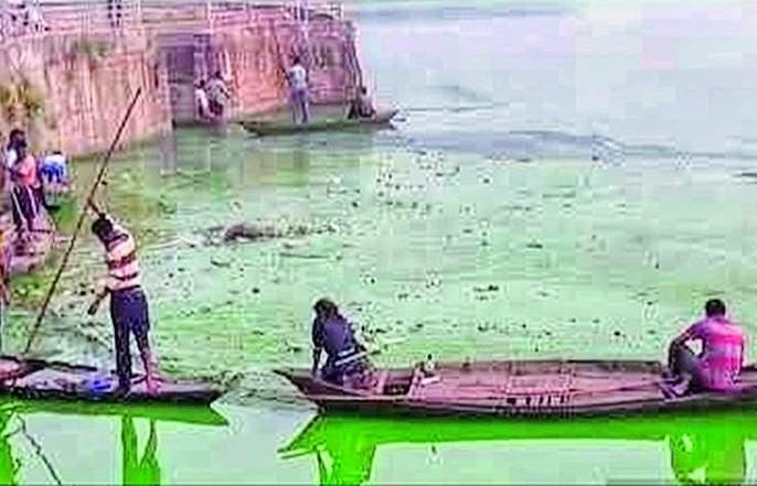 Fish endangered by water pollution in Ramala Lake | रामाळा तलावातील जलप्रदूषणाने मासे धोक्यात