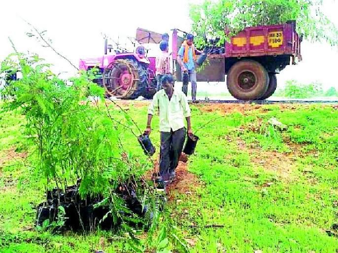 Eventually planting the tree from the machinery | अखेर यंत्रणेकडून वृक्ष लागवड
