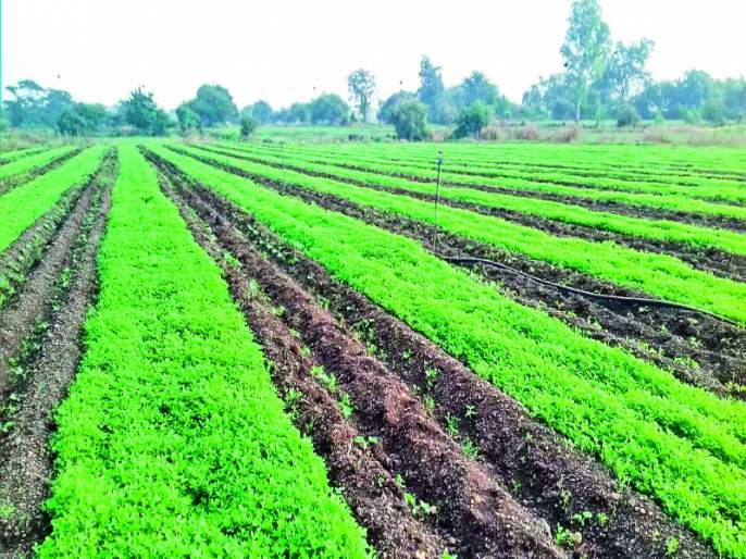 More earning from Fenugreek crops to farmer | मेथीने बनविले शेतकऱ्याला लखपती