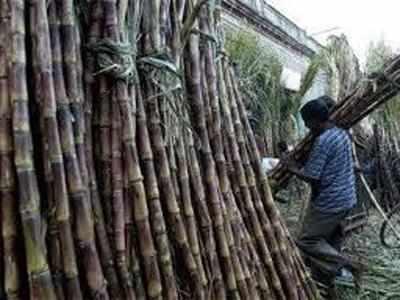 Increase the rate of cane transportation, demand of Regional Sugar Joint Director of Sugarcane Harvesting and Transport Association | ऊस वाहतुकीच्या दरात वाढ करा, ऊस तोडणी व वाहतूक संघटनेची मागणी
