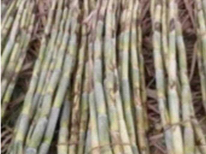 1 lakh 70 thousand tons of sugarcane will be crushed in the coming season | येत्या हंगामात १ लाख ७० हजार टन उसाचे गाळप होणार