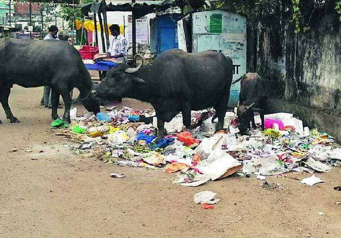 Garbage on the road even when there are boxes | पेट्या असतानाही कचरा रस्त्यावर