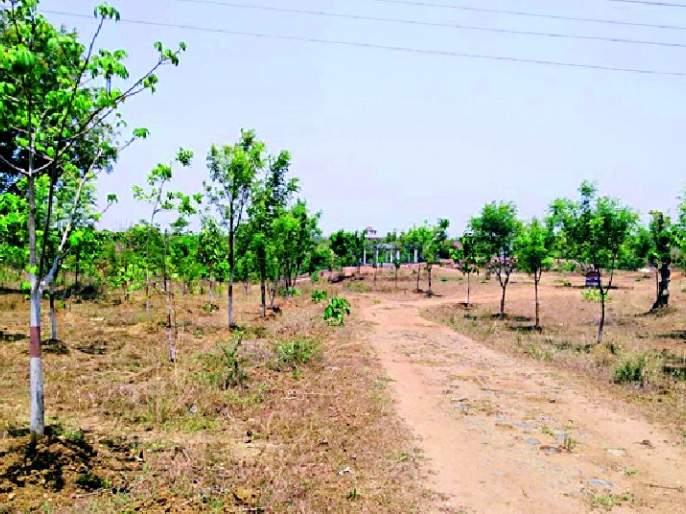The forest grew out of the hard work of social forestry | सामाजिक वनीकरणच्या परिश्रमातून बहरली वनराई