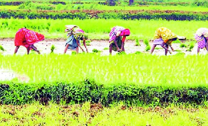 In the district, 3 percent of the sowing was done | जिल्ह्यात ८५ टक्के रोवणी आटोपली
