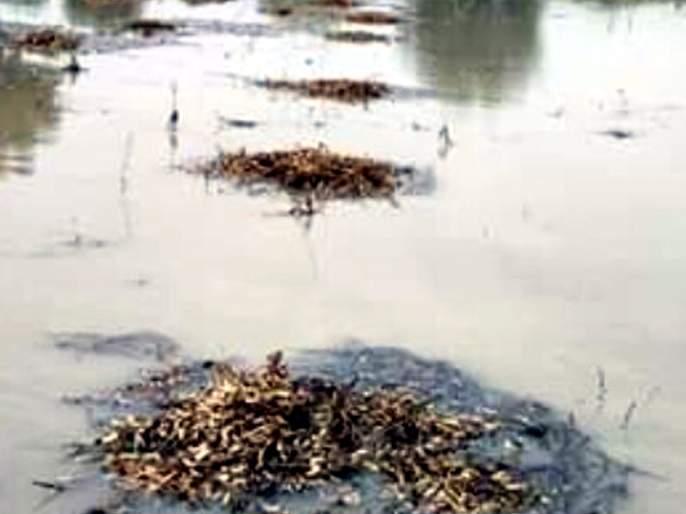 Parbhani: Loss of beans on two thousand hectares | परभणी :दोन हजार हेक्टरवरील सोयाबीनचे नुकसान