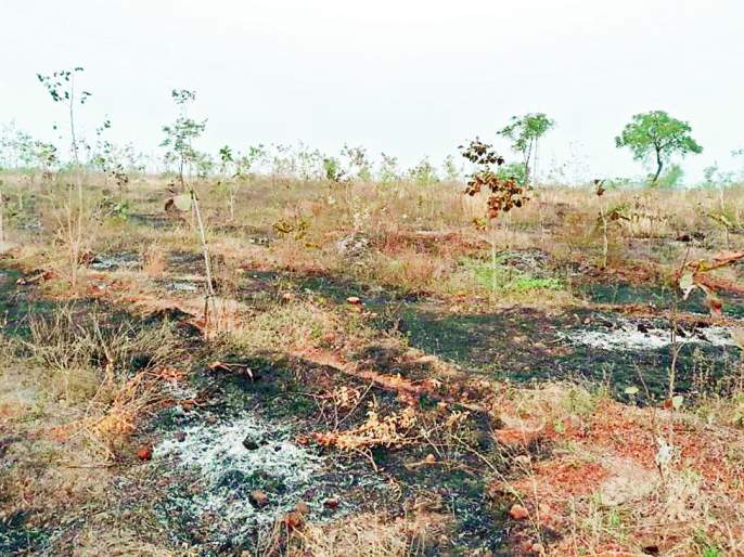 The trees burned again on the hill of Ambarshi | अंबर्षी टेकडीवर झाडे पुन्हा जाळली