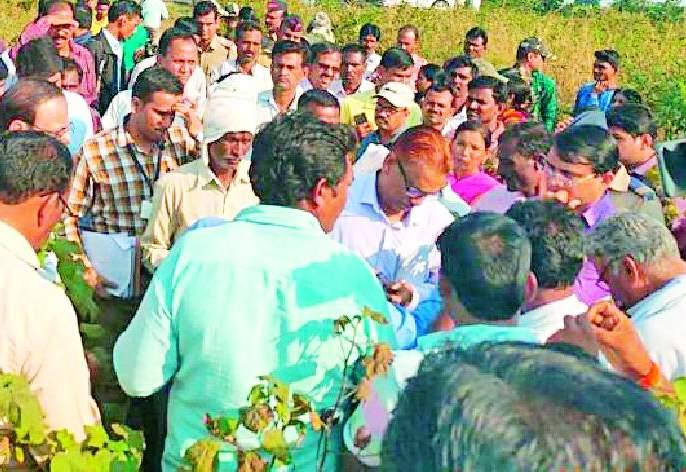 Farmers' outcry shows rotten crop | सडलेले पीक दाखवत शेतकऱ्यांचा आक्रोश