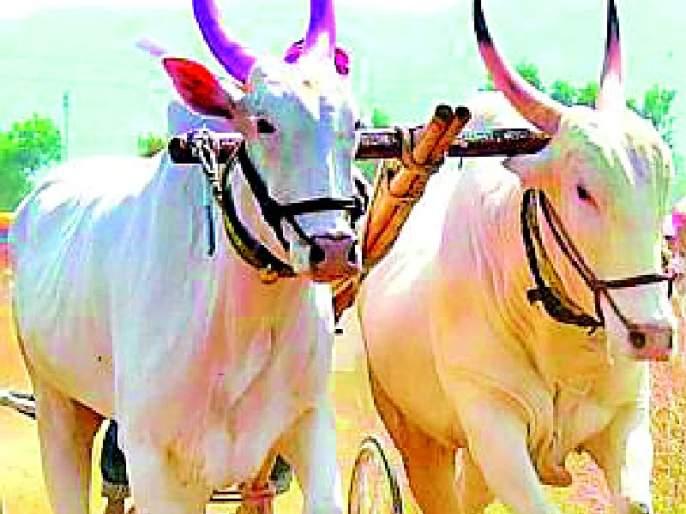 sale purchase of bulls | बैलजोडींची खरेदी-विक्री बंद