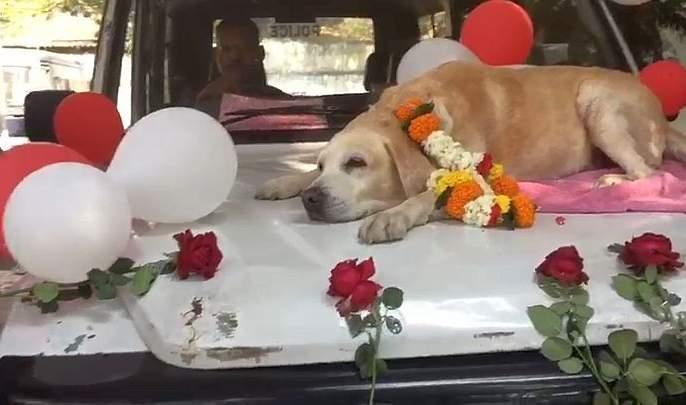Police salute sniffer spike dog looking for petrol bomb! | पेट्रोल बॉम्ब शोधणारा स्निफर स्पाइकश्वानाला पोलिसांचा सॅल्यूट!