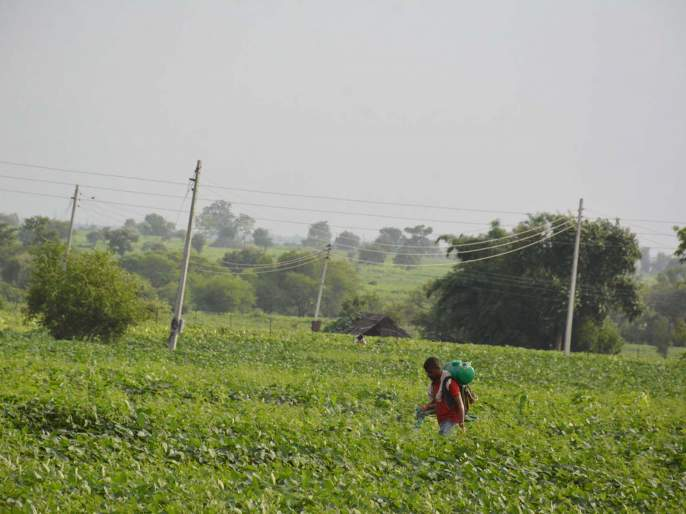 Barrier to 3 farmers while spraying fields | शेतात फवारणी करताना ७१८ शेतक-यांना बाधा