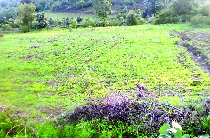 About 3,000 acres of land in Washim district without sowing yet! | वाशिम जिल्ह्यात ३३ हजार एकर क्षेत्र अद्यापही पेरणीविना!