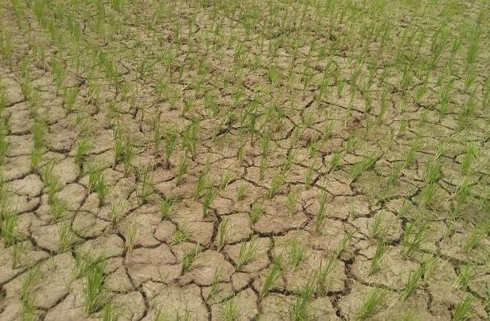 Water crisis in 24 districts in the state; The graph of suicide of farmers increased | राज्यातील २४ जिल्ह्यांमध्ये पाणीबाणी;शेतकरी आत्महत्यांचा आलेख वाढला