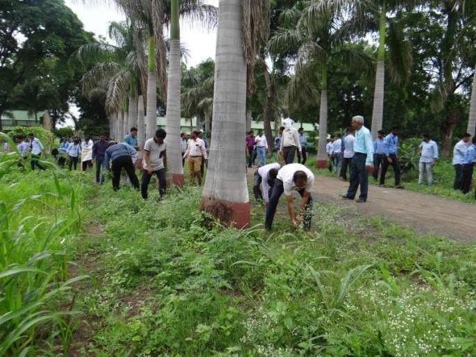 Grass eradication at Dr. Panjabrao Deshmukh Agricultural University Akola | डॉ. पंजाबराव देशमुख कृषी विद्यापीठात गाजर गवत निर्मूलन!